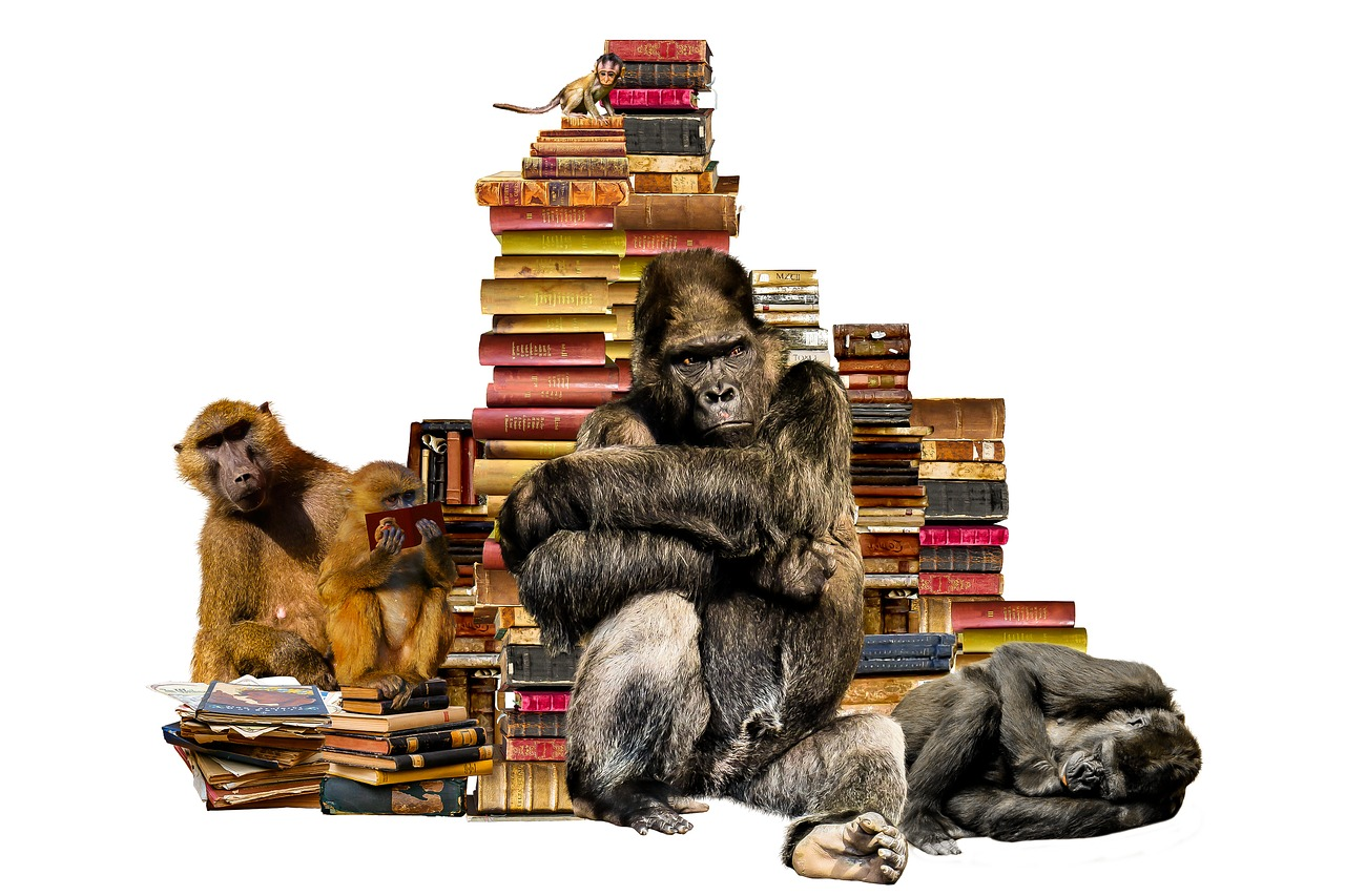 What is Primatology