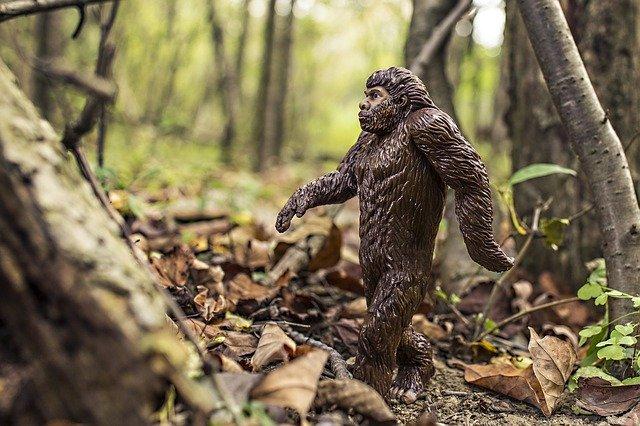 Explaination of primatology